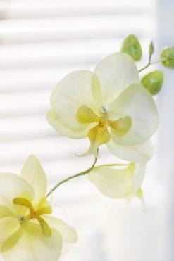 Орхидея из фоамирана создана на живом мастер-классе в Москве в студии makeflowers.ru