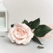 Молд лепестка розы.