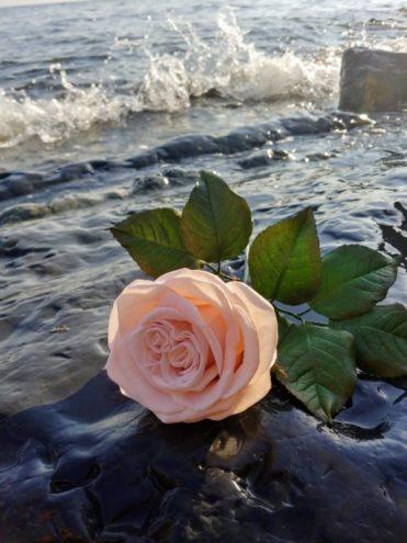 Молд лепестка розы. Автор Светлана Калиниченко