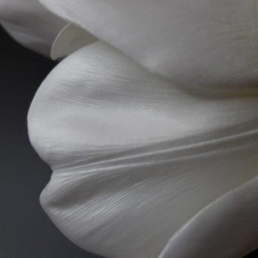 Отпечатки на молде и вайнере внутреннего лепестка тюльпана
